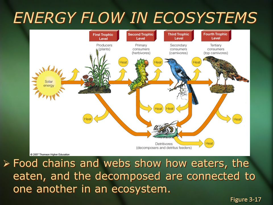 ENERGY FLOW IN ECOSYSTEMS  Food chains and webs show how eaters, the eaten, and the decomposed are connected to one another in an ecosystem.