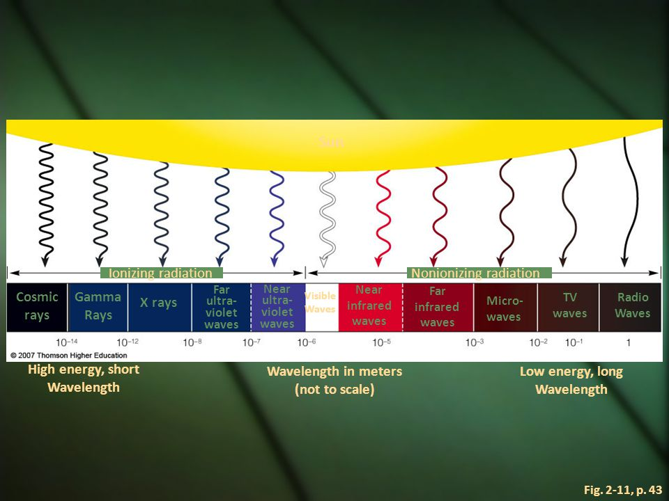 Electromagnetic Spectrum  Organisms vary in their ability to sense different parts of the spectrum.