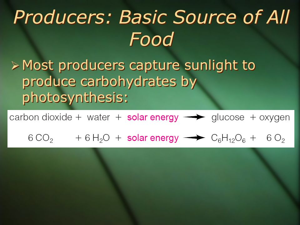 Producers: Basic Source of All Food  Most producers capture sunlight to produce carbohydrates by photosynthesis: