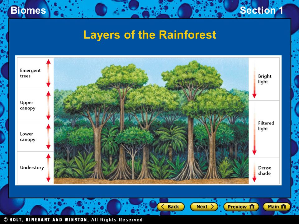 BiomesSection 1 Layers of the Rainforest