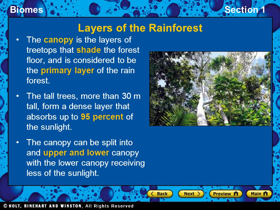 BiomesSection 1 Layers of the Rainforest The canopy is the layers of treetops that shade the forest floor, and is considered to be the primary layer o
