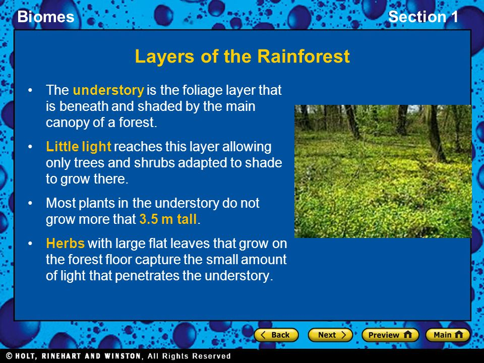 BiomesSection 1 Layers of the Rainforest The understory is the foliage layer that is beneath and shaded by the main canopy of a forest. Little light r