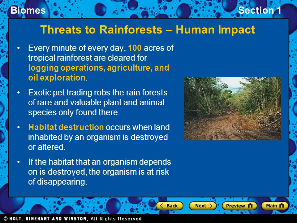 BiomesSection 1 Threats to Rainforests – Human Impact Every minute of every day, 100 acres of tropical rainforest are cleared for logging operations,