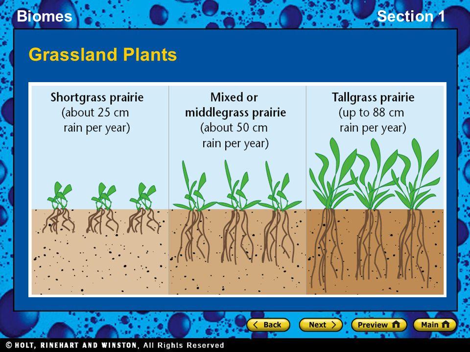 BiomesSection 1 Grassland Plants