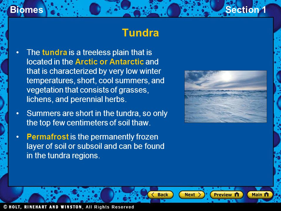 BiomesSection 1 Tundra The tundra is a treeless plain that is located in the Arctic or Antarctic and that is characterized by very low winter temperat