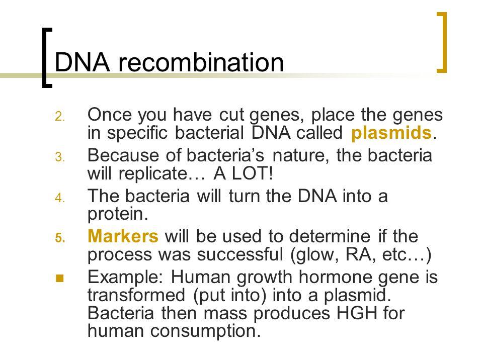 DNA recombination 2.