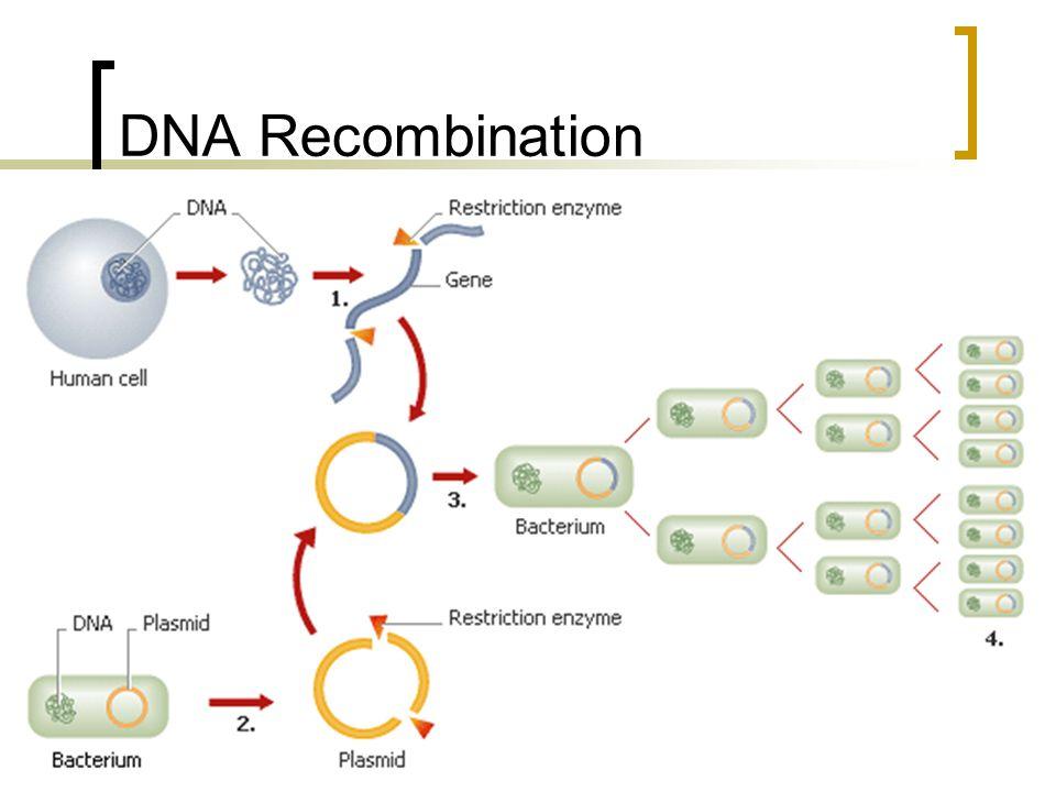 DNA Recombination