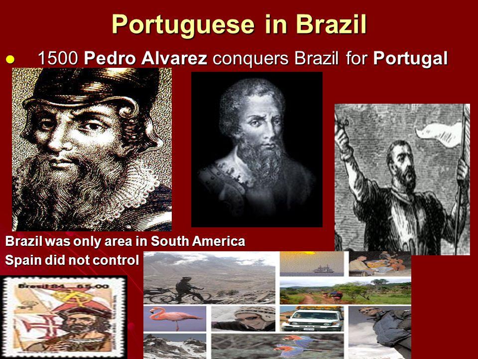 Portuguese in Brazil 1500 Pedro Alvarez conquers Brazil for Portugal 1500 Pedro Alvarez conquers Brazil for Portugal Brazil was only area in South Ame