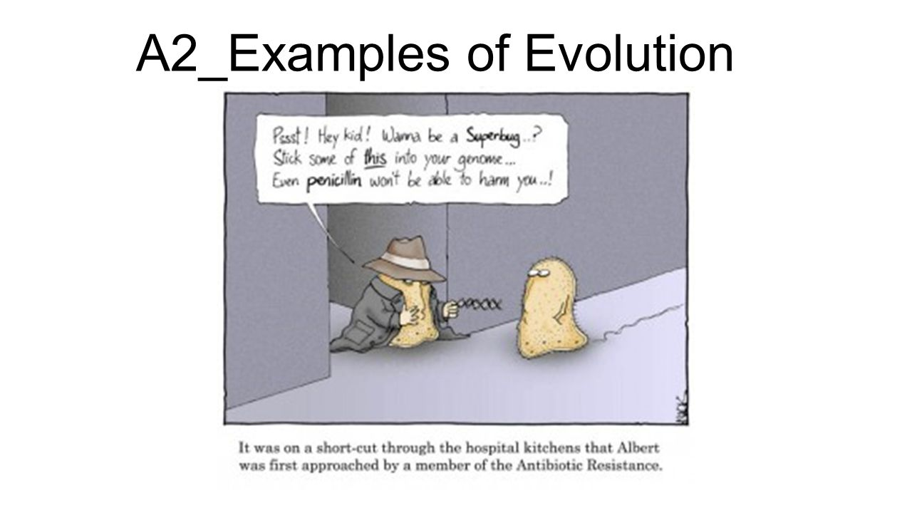 A2_Examples of Evolution