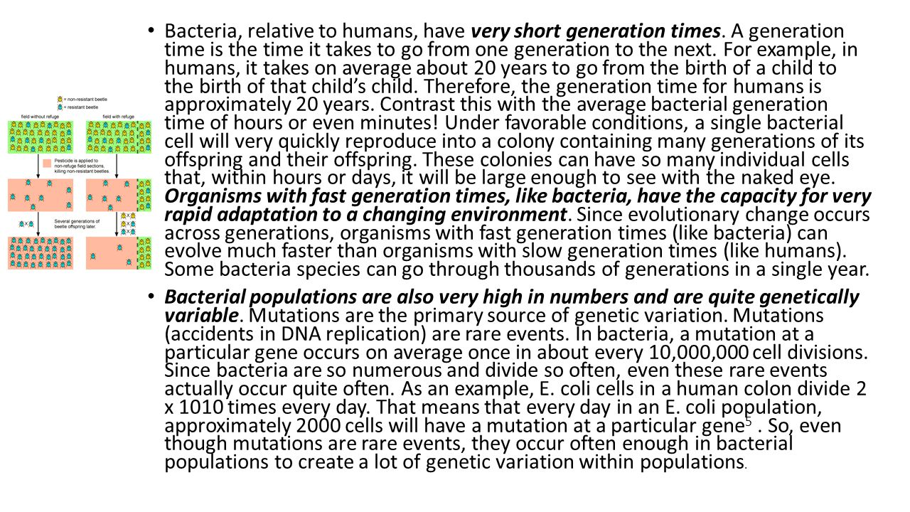 Bacteria, relative to humans, have very short generation times. A generation time is the time it takes to go from one generation to the next. For exam