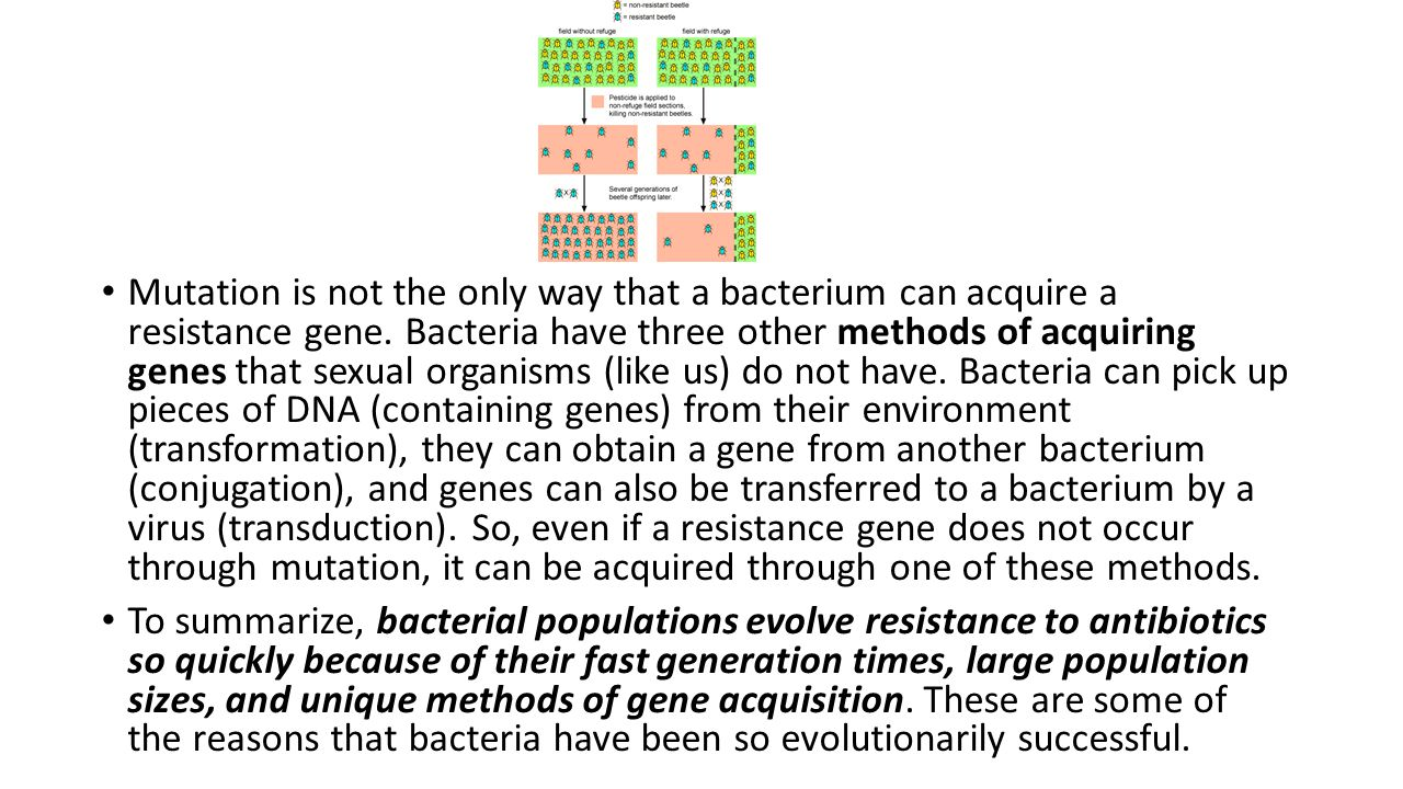 So what happens if a bacterial cell has a mutation that allows it to resist the effect of an antibiotic.