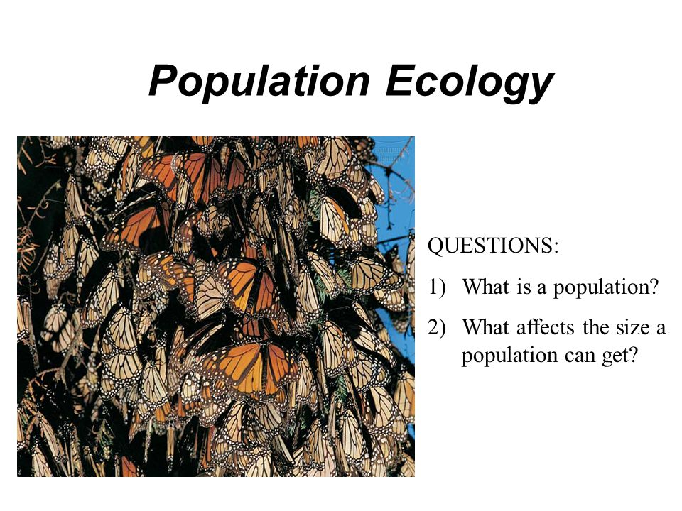 Population Ecology QUESTIONS: 1)What is a population? 2)What affects the size a population can get?