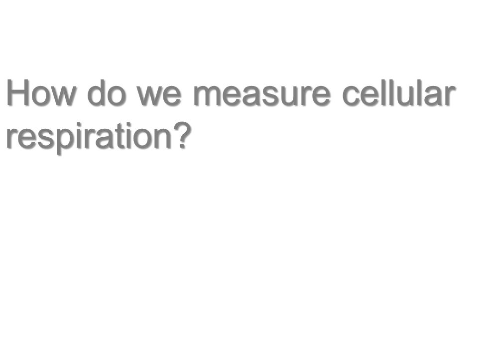 How do we measure cellular respiration
