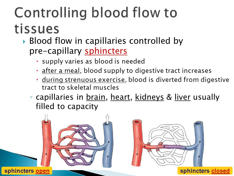  Capillaries ◦ very thin walls  lack 2 outer wall layers  only endothelium  enhances exchange across capillary ◦ diffusion  exchange between bloo