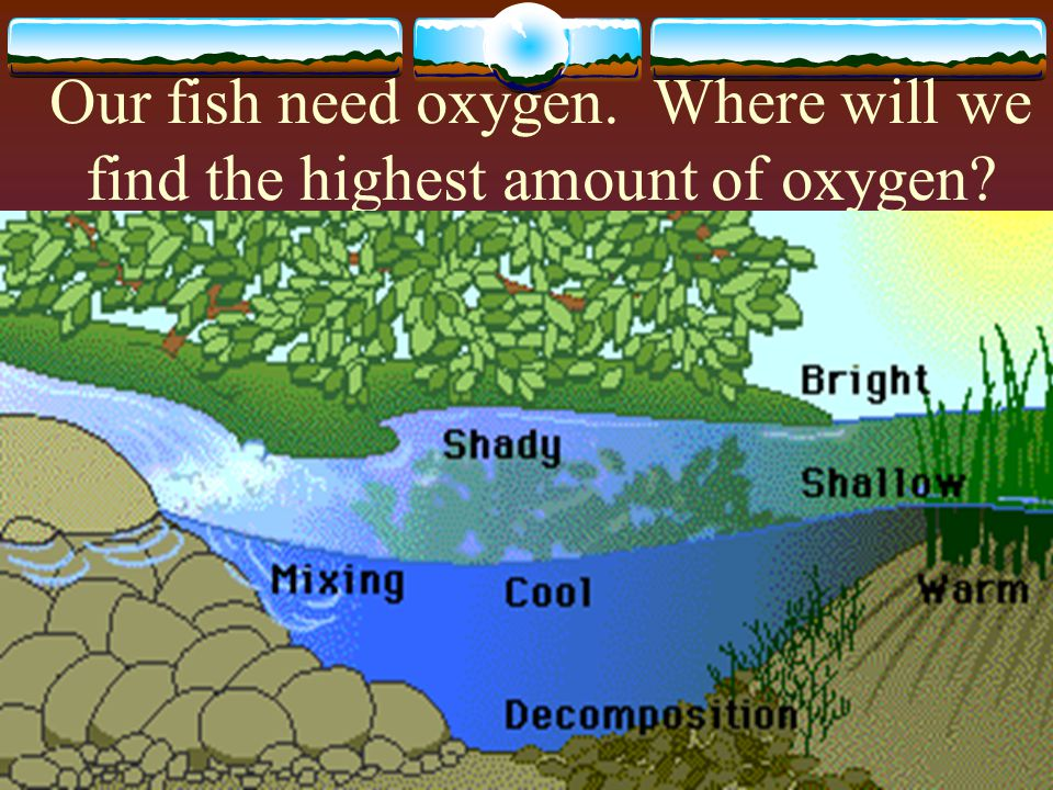 Our fish need oxygen. Where will we find the highest amount of oxygen
