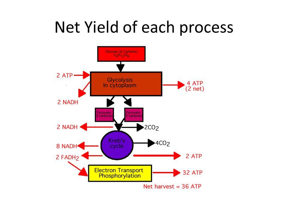 Net Yield of each process
