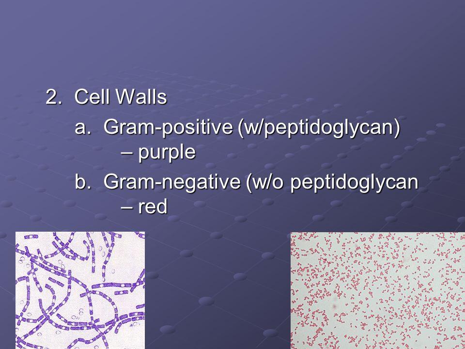 2. Cell Walls a. Gram-positive (w/peptidoglycan) – purple b. Gram-negative (w/o peptidoglycan – red