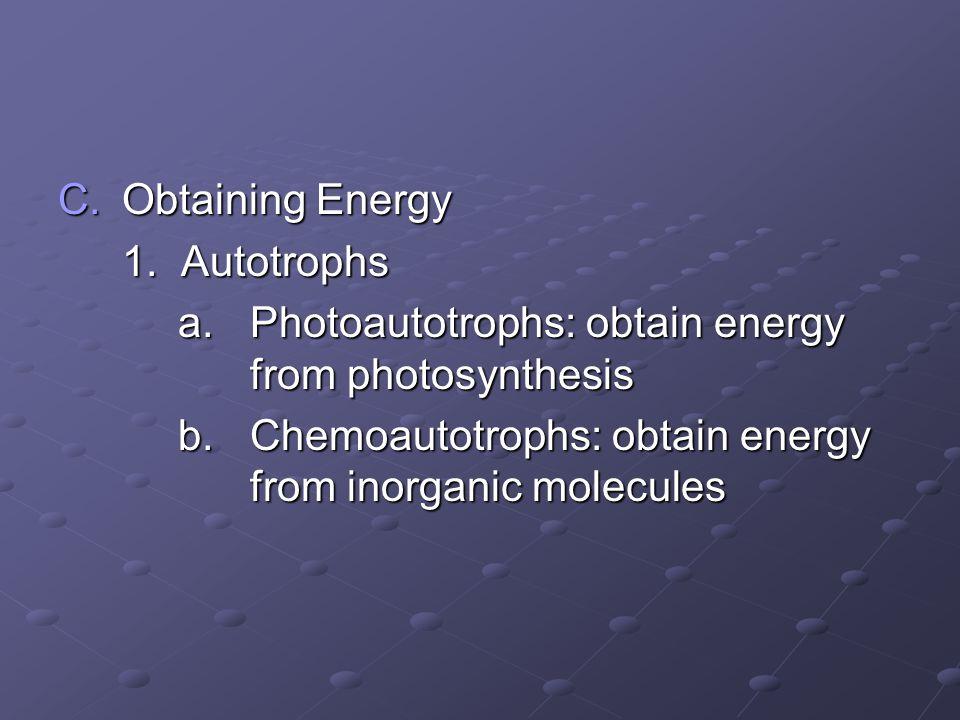 C.Obtaining Energy 1. Autotrophs a. Photoautotrophs: obtain energy from photosynthesis a. Photoautotrophs: obtain energy from photosynthesis b. Chemoa