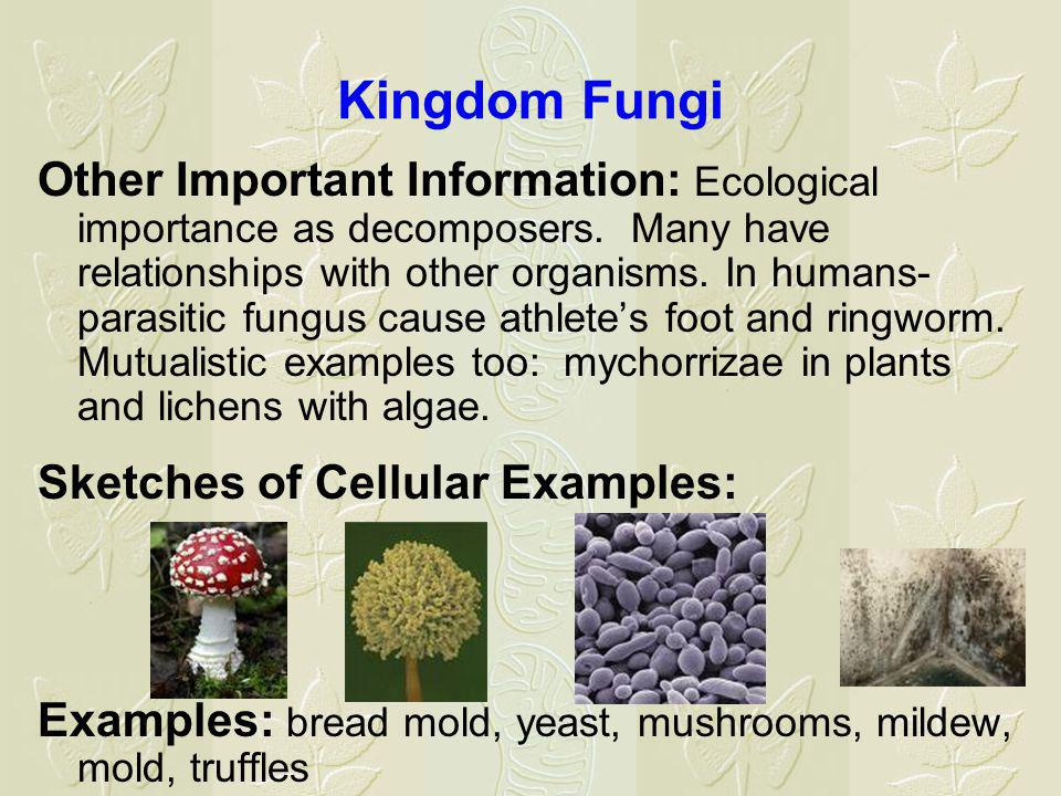 Kingdom Fungi Other Important Information: Ecological importance as decomposers.