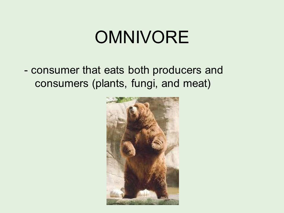 HERBIVORE - consumer that eats only producers.