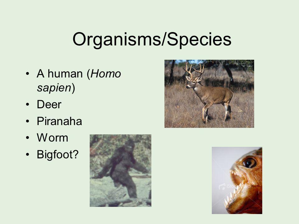 Organisms/Species A human (Homo sapien) Deer Piranaha Worm Bigfoot?