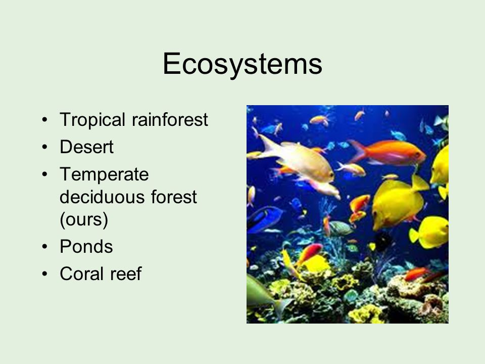 Ecosystems Tropical rainforest Desert Temperate deciduous forest (ours) Ponds Coral reef