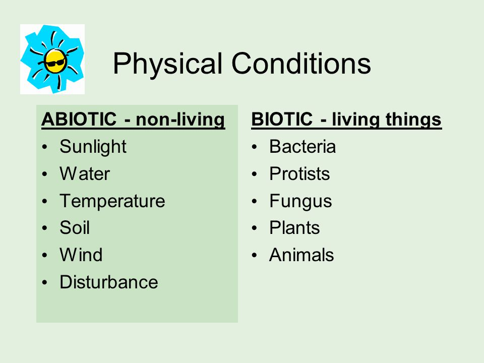 Physical Conditions ABIOTIC - non-living Sunlight Water Temperature Soil Wind Disturbance BIOTIC - living things Bacteria Protists Fungus Plants Animals