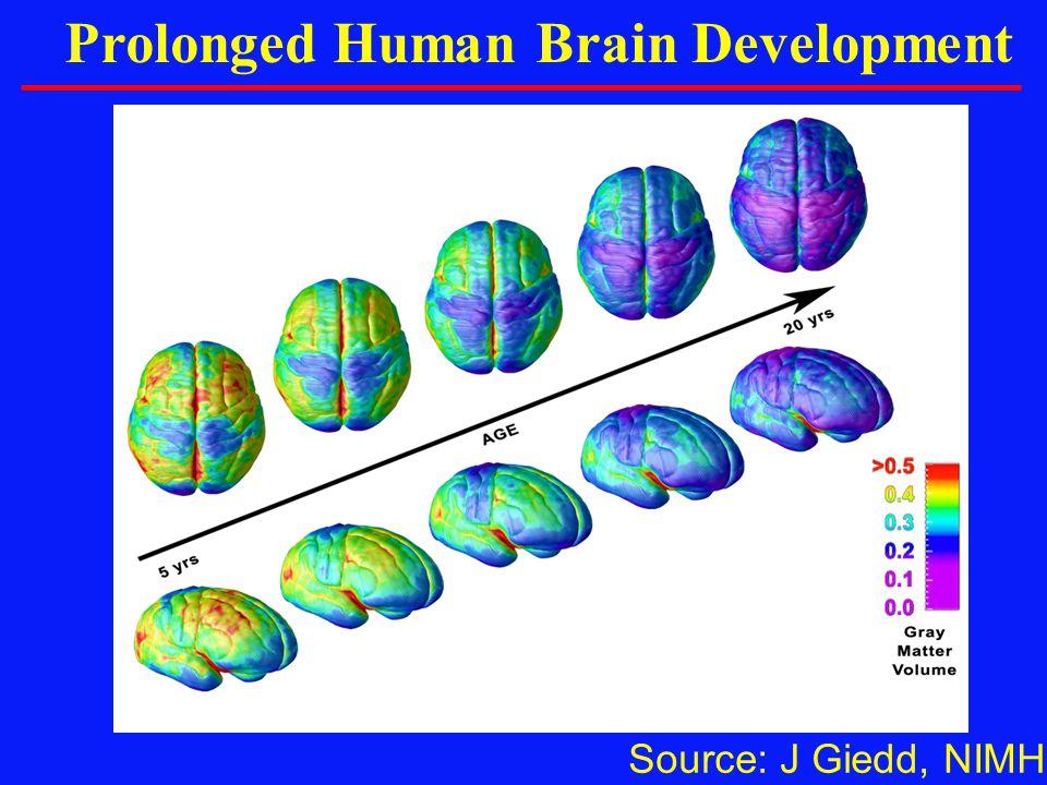 Source: J Giedd, NIMH Prolonged Human Brain Development