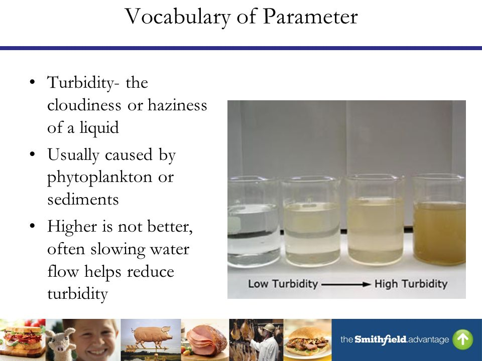 Vocabulary of Parameter Turbidity- the cloudiness or haziness of a liquid Usually caused by phytoplankton or sediments Higher is not better, often slowing water flow helps reduce turbidity