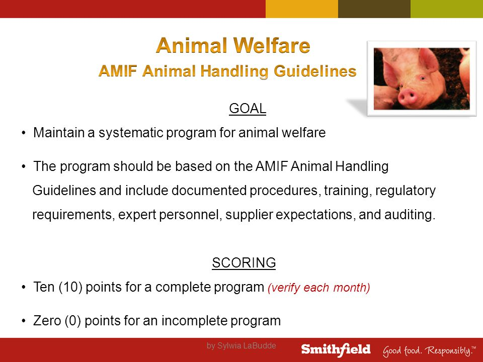 by Sylwia LaBudde GOAL Maintain a systematic program for animal welfare The program should be based on the AMIF Animal Handling Guidelines and include documented procedures, training, regulatory requirements, expert personnel, supplier expectations, and auditing.