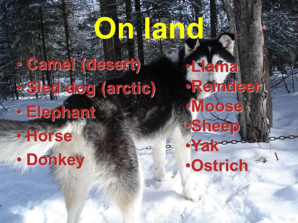 On land Camel (desert)Camel (desert) Sled dog (arctic)Sled dog (arctic) ElephantElephant HorseHorse DonkeyDonkey LlamaLlama ReindeerReindeer MooseMoos