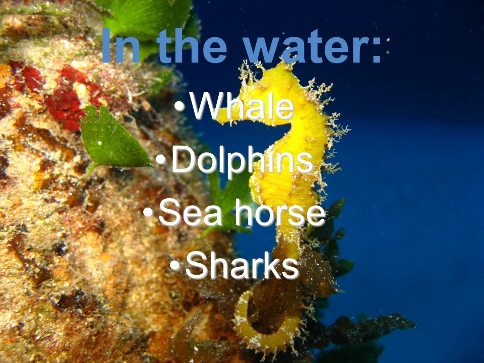 In the water: WhaleWhale DolphinsDolphins Sea horseSea horse SharksSharks