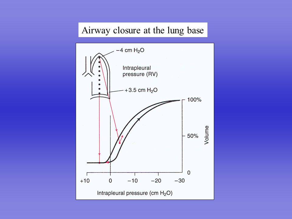 Airway closure at the lung base