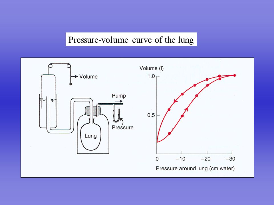 3000 2000 1000 FRC 0-10-20-30 Intrapleural pressure (cmH 2 O) Volume above FRC (ml) COMPLIANCE= ΔV / ΔP =1000/5 = 200 ml/cmH 2 O ΔVΔV ΔPΔP Compliance of lung