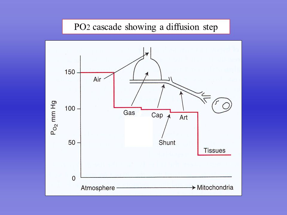 PO 2 cascade showing a diffusion step
