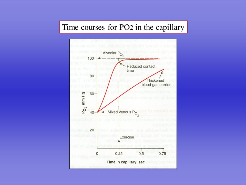 Time courses for PO 2 in the capillary