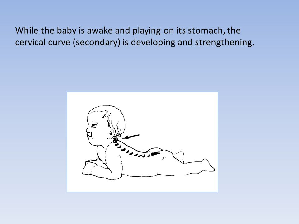 While the baby is awake and playing on its stomach, the cervical curve (secondary) is developing and strengthening.