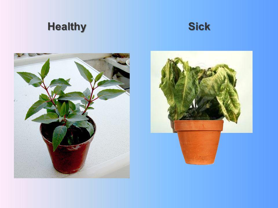 Healthy Sick Healthy Sick