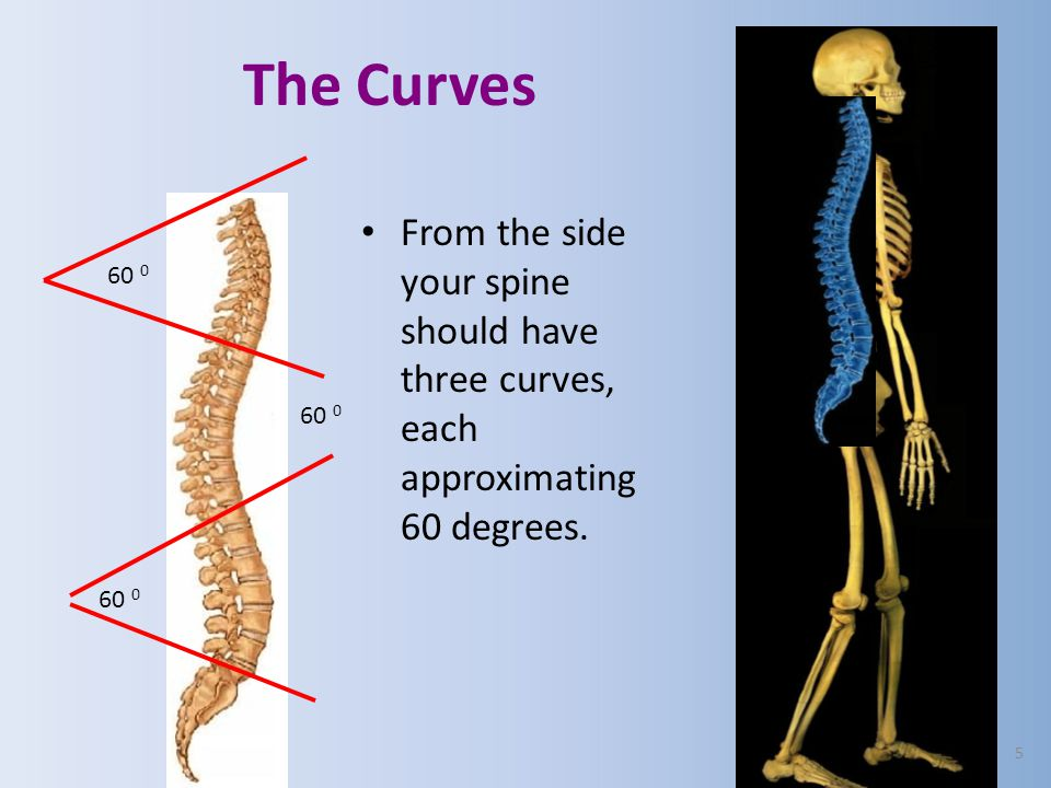 1.Corrective spinal adjustments followed by 2.Maintenance. YOUR Program consists of: