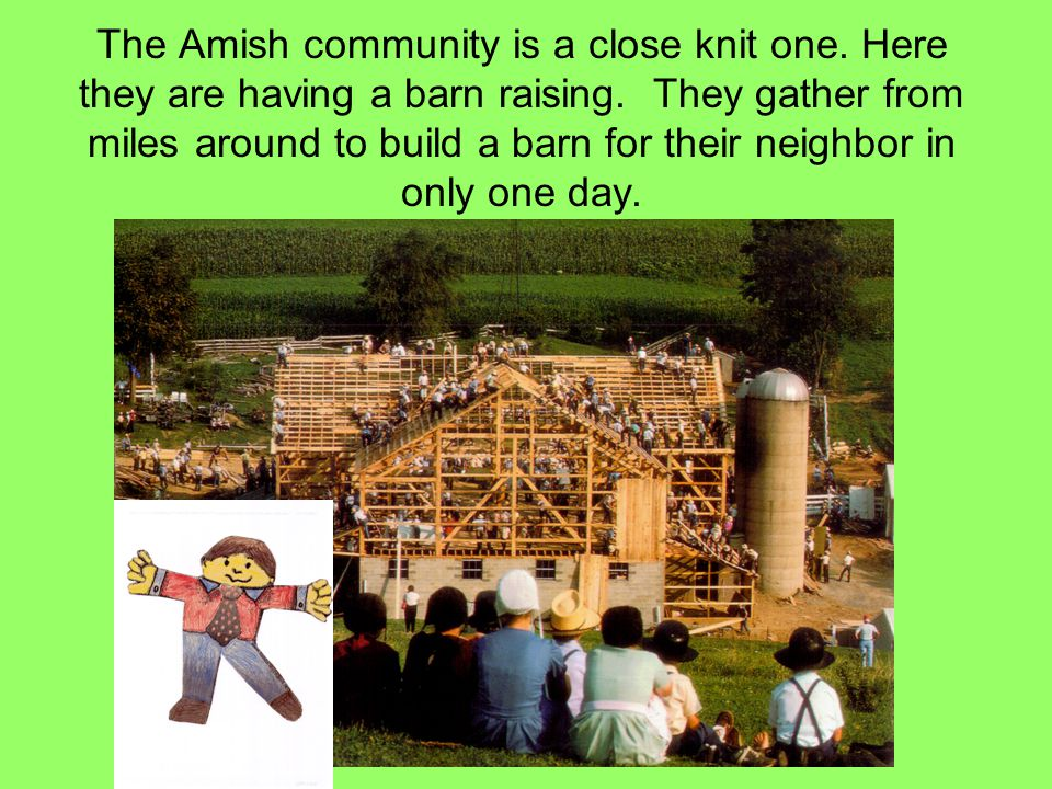 The Amish community is a close knit one. Here they are having a barn raising. They gather from miles around to build a barn for their neighbor in only