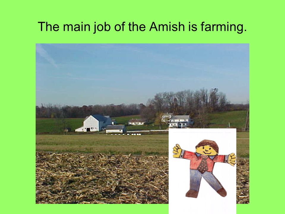 The main job of the Amish is farming.