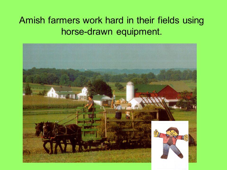 Amish farmers work hard in their fields using horse-drawn equipment.