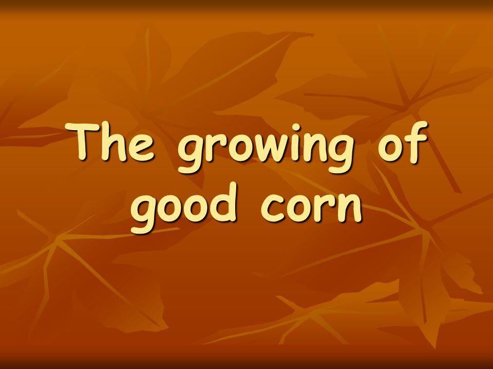 The growing of good corn