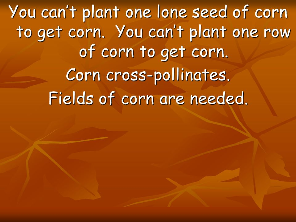 You can't plant one lone seed of corn to get corn. You can't plant one row of corn to get corn. Corn cross-pollinates. Fields of corn are needed.