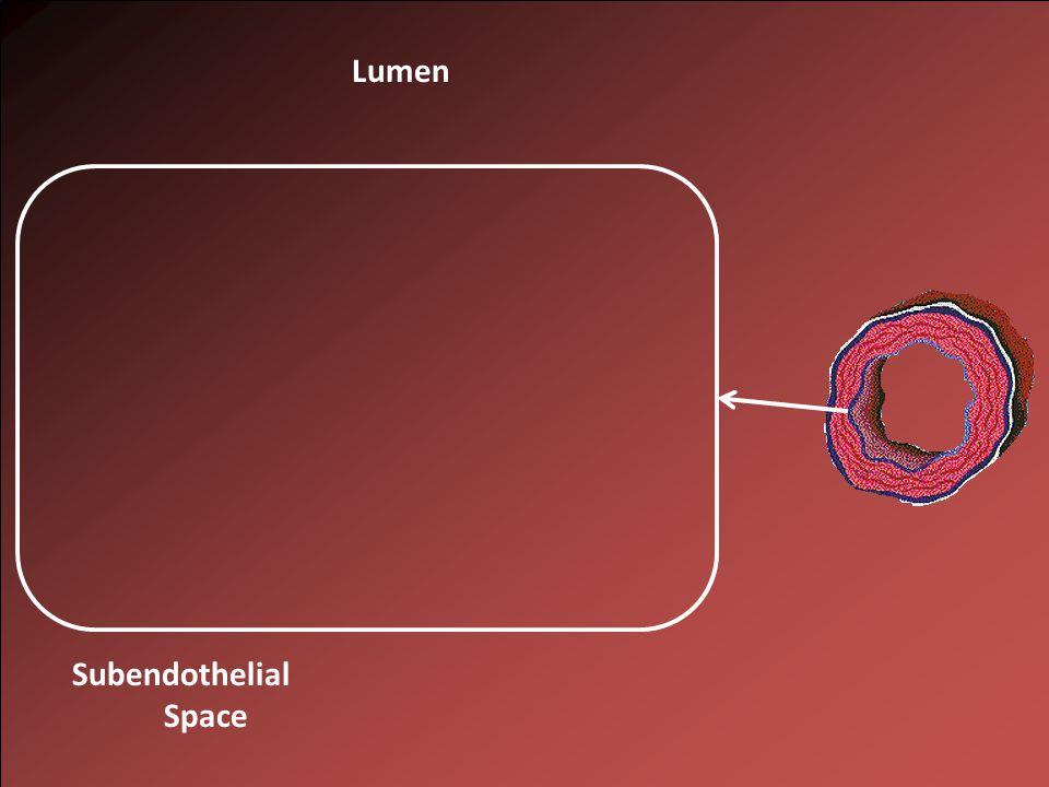 Lumen Subendothelial Space