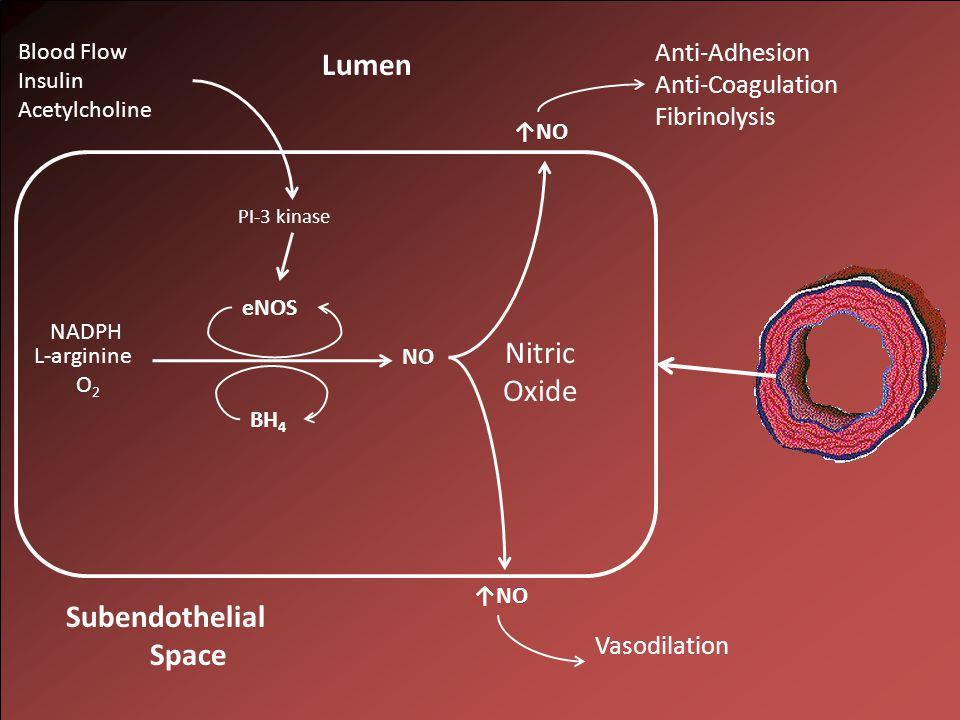 NO L-arginine O 2 NADPH Lumen ↑NO Subendothelial Space eNOS BH 4 PI-3 kinase Blood Flow Insulin Acetylcholine Anti-Adhesion Anti-Coagulation Fibrinolysis Vasodilation Nitric Oxide