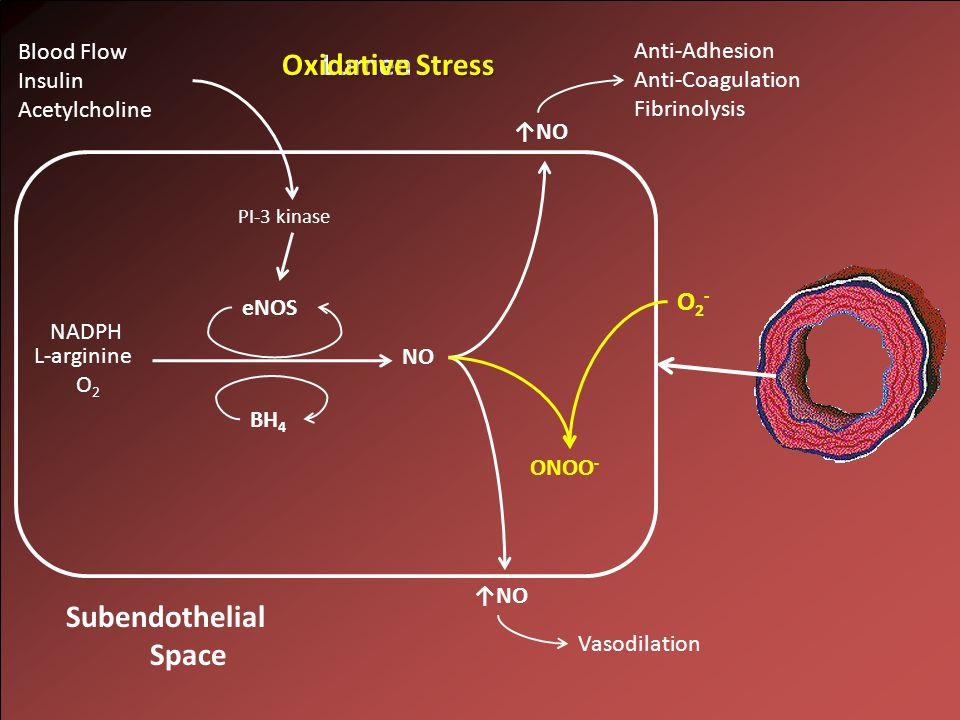 NO L-arginine O 2 NADPH Lumen ↑NO Subendothelial Space eNOS BH 4 PI-3 kinase Blood Flow Insulin Acetylcholine Anti-Adhesion Anti-Coagulation Fibrinolysis Vasodilation Oxidative Stress O2-O2- ONOO -