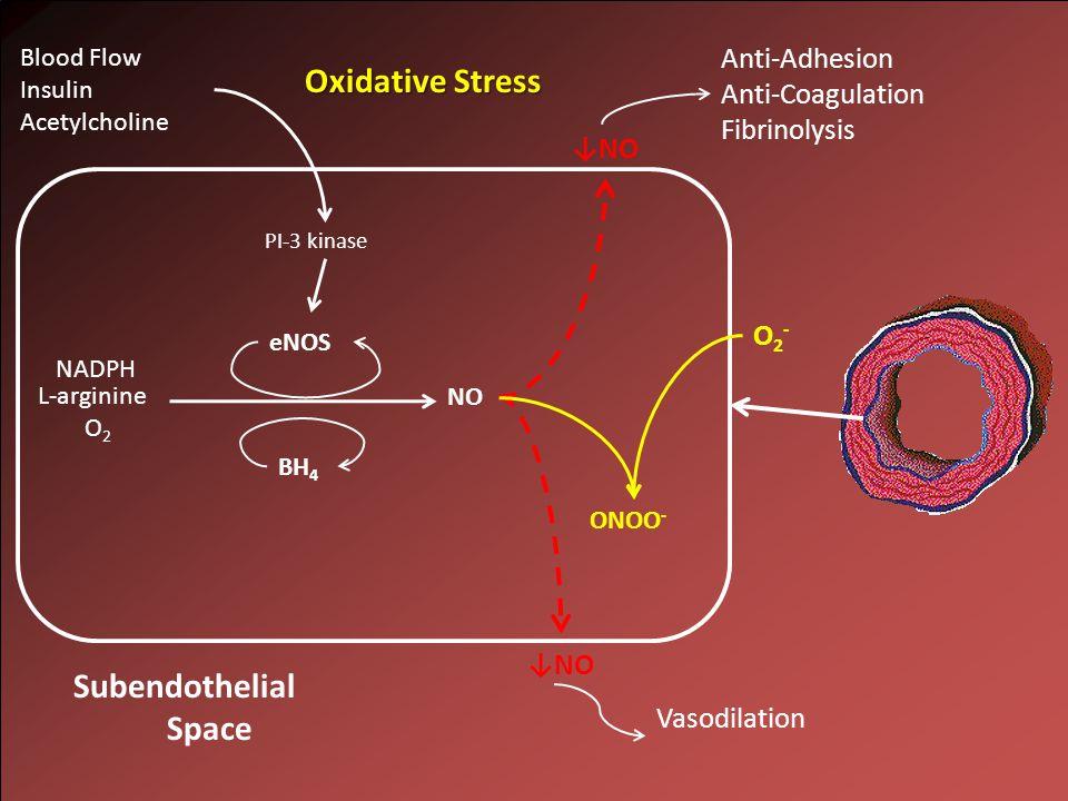 NO L-arginine O 2 NADPH ↓NO Subendothelial Space eNOS BH 4 PI-3 kinase Blood Flow Insulin Acetylcholine Anti-Adhesion Anti-Coagulation Fibrinolysis Vasodilation Oxidative Stress O2-O2- ↓NO ONOO -