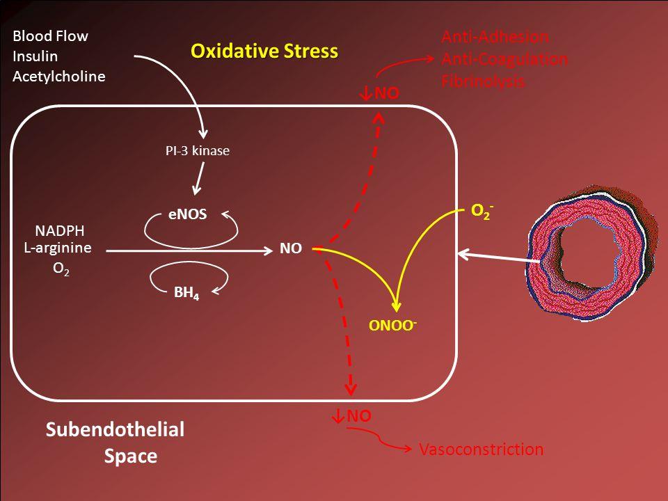 NO L-arginine O 2 NADPH ↓NO Subendothelial Space eNOS BH 4 PI-3 kinase Blood Flow Insulin Acetylcholine Anti-Adhesion Anti-Coagulation Fibrinolysis Vasoconstriction Oxidative Stress O2-O2- ↓NO ONOO -