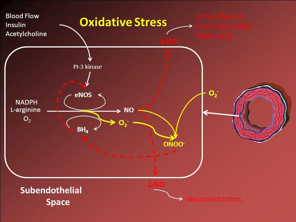 NO L-arginine O 2 NADPH ↓NO Subendothelial Space eNOS BH 4 PI-3 kinase Blood Flow Insulin Acetylcholine Anti-Adhesion Anti-Coagulation Fibrinolysis Vasoconstriction Oxidative Stress O2-O2- ↓NO ONOO - O2-O2-